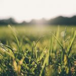 Common lawn care myths dispelled