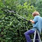 3 Essential Tips For Perfect Hedge Trimming