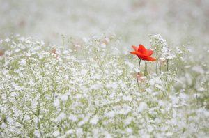 Garden mowers lancashire